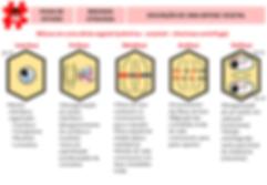 mapas mentais - 8 - mitose vegetal.png