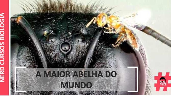 A MAIOR ABELHA DO MUNDO