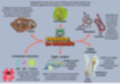 evidencias da evolução.jpg