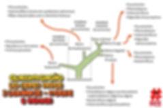 Mapas_mentais_-_classificação_dos_seres_