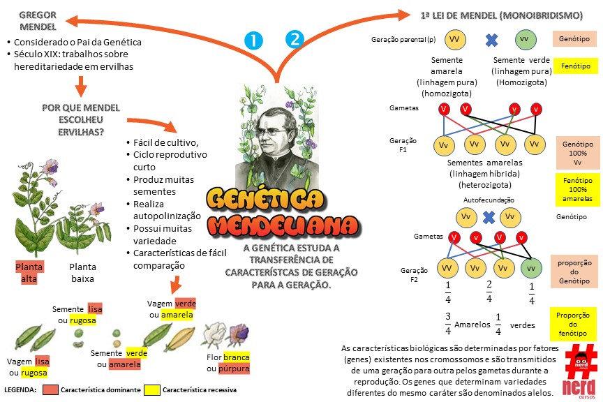 Mapas_mentais_-_gENÉTICO_-_PRIMEIRA_LEI_