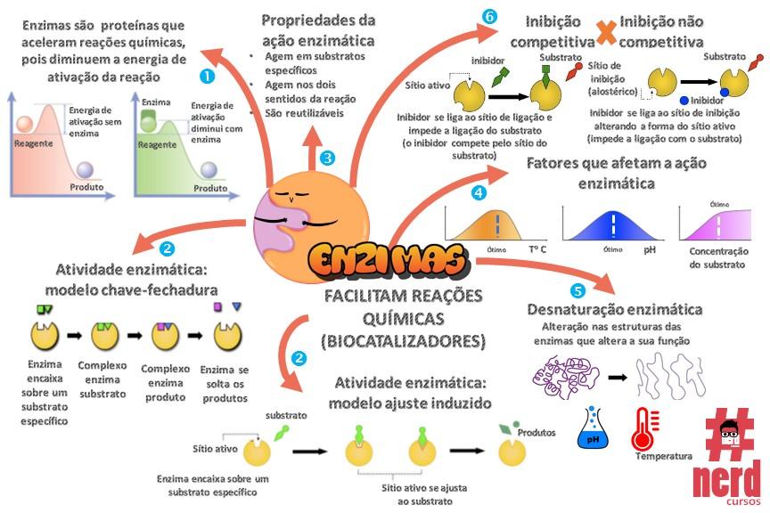 1 - Mapas metais - Bioquímica (7)