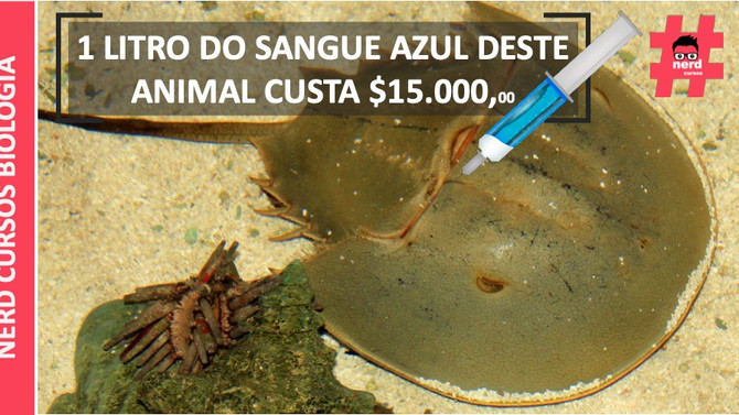 1 LITRO DO SANGUE AZUL DESTE ANIMAL CUSTA $15.000,00