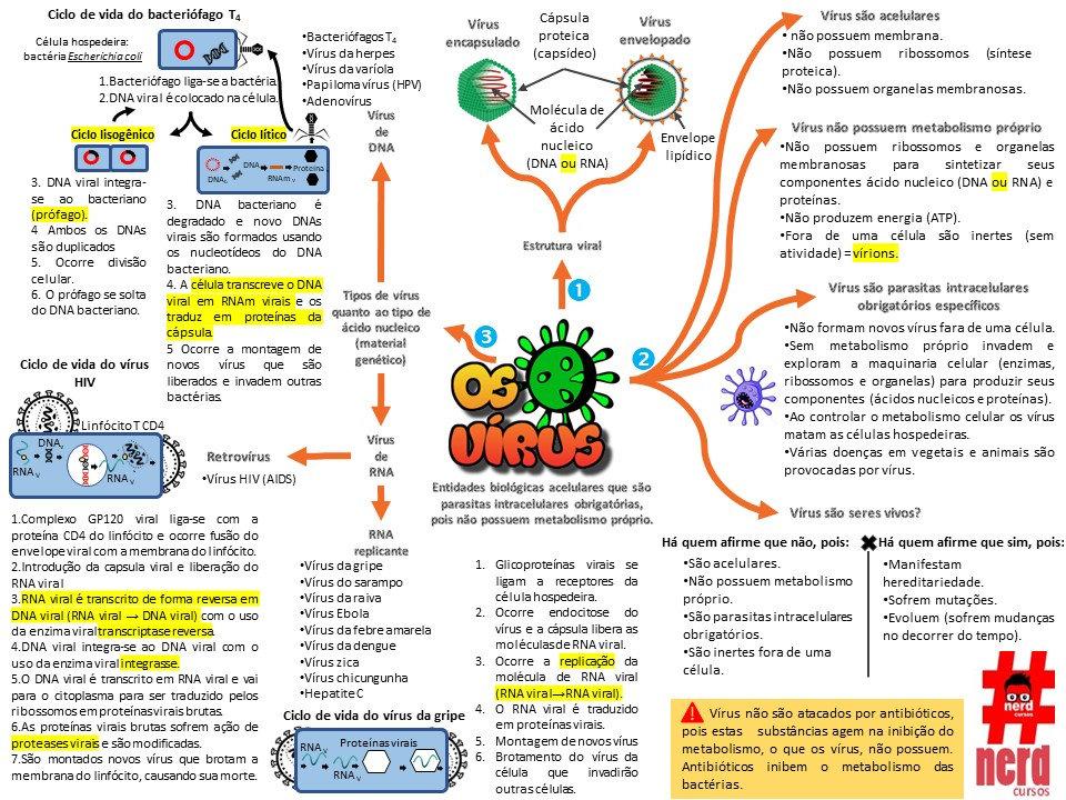 mapas de estudo - os vírus