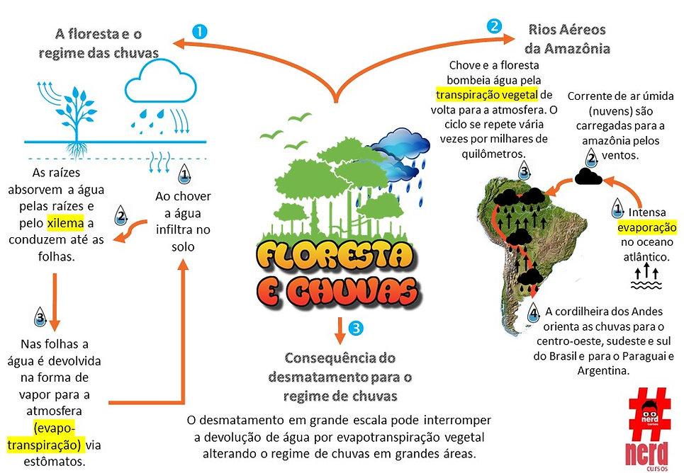Mapas mentais - floresta e chuvas.jpg
