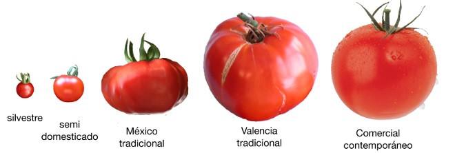 Por que o gosto dos vegetais está sem graça?