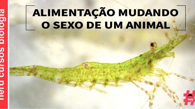 ALIMENTAÇÃO MUDANDO O SEXO DE UM ANIMAL