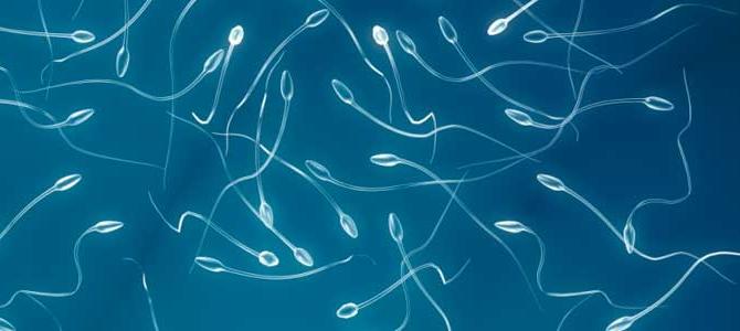 Os homens estão produzindo menos espermatozoides.