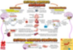 Mapas_mentais_-_sistema_nervoso_autonomo