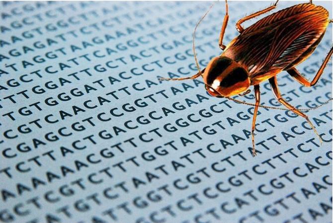 O super genoma das baratas.