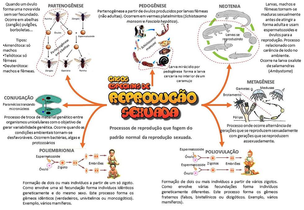 Mapas_mentais_-_casos_especiais_de_repro