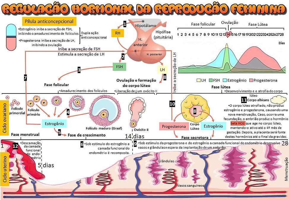 Mapas_mentais_-_regulação_hormonal_femin