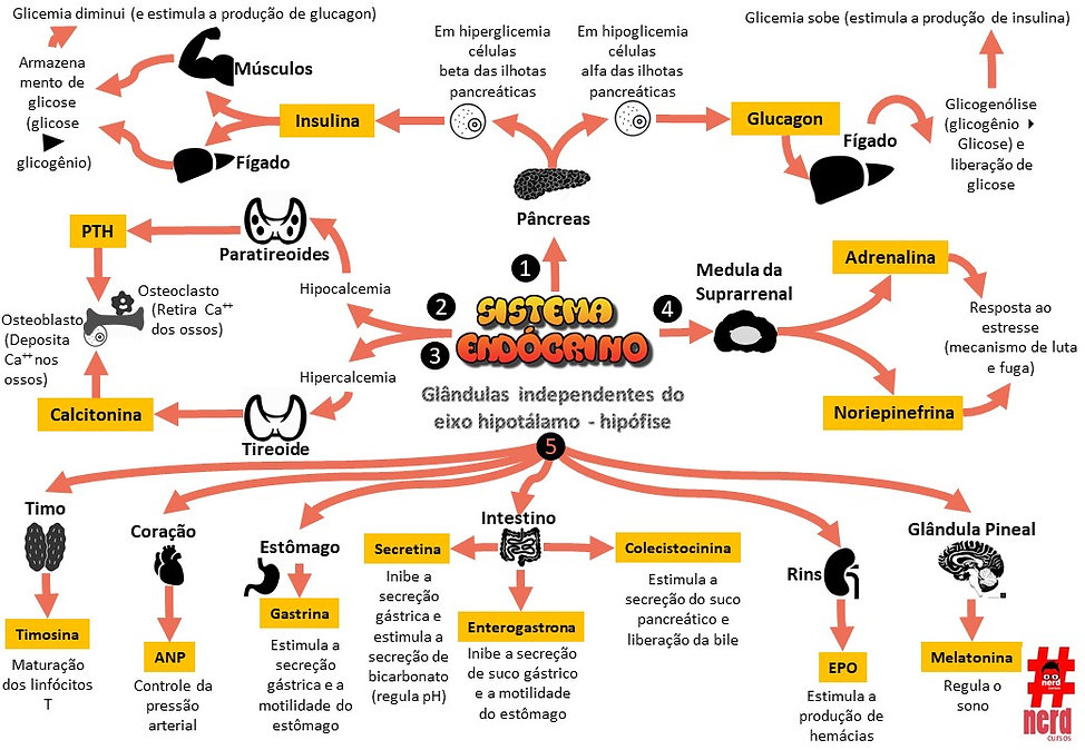 Mapas_mentais_-_hormonios_indepedentes_d