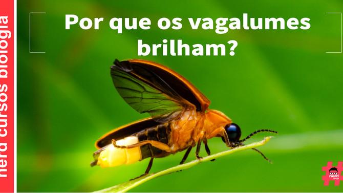 POR QUE OS VAGALUMES BRILHAM?