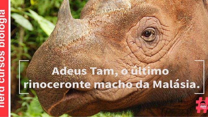Adeus Tam, o último rinoceronte macho da Malásia.