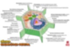 Mapas_mentais_03_-_Célula_Eucariótica_Ve