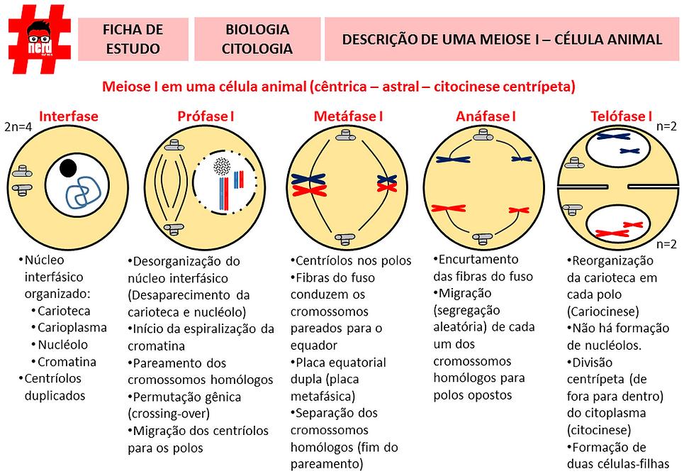 Mapas mentais - 5 - meiose 1.png