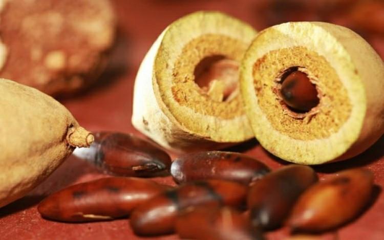 Foto - Castanha-de-baru (Fruto e semente)