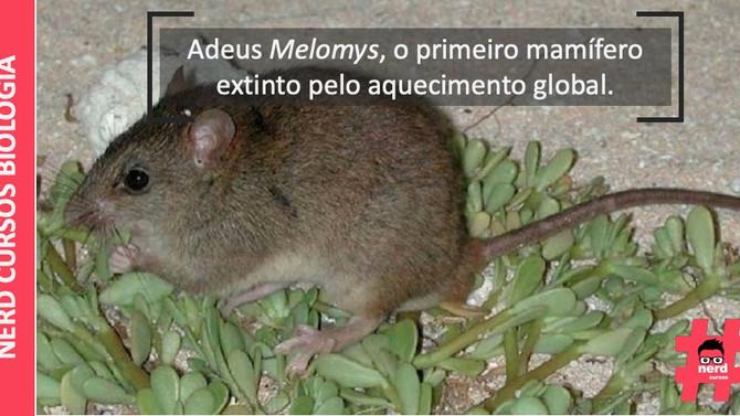 Adeus Melomys, o primeiro mamífero extinto pelo aquecimento global.