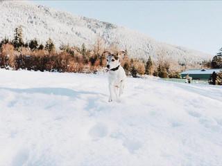 tucker snowy.jpg