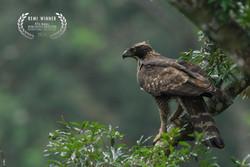 Hawk Eagle Heroes