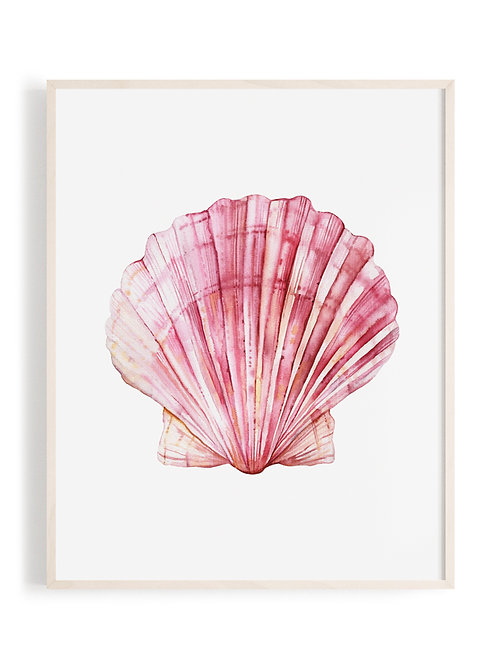'Blushing Scallop' Art Print