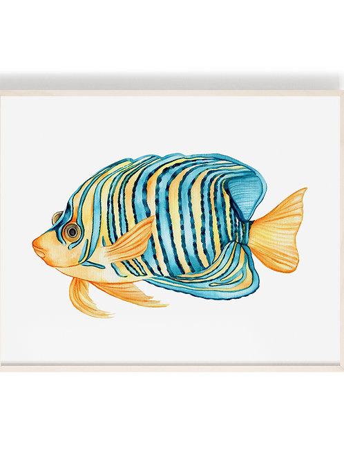 'Royal Angelfish' Art Print