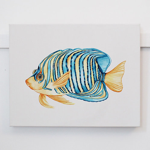 'Royal Angelfish' Original Watercolor Canvas Painting