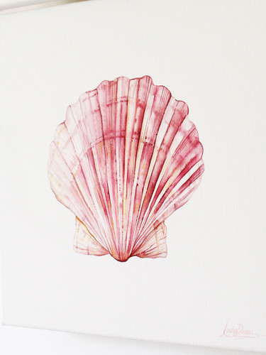 'Blushing Scallop' Watercolor Painting