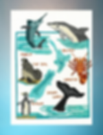 NZ Sealife cross stitch pattern