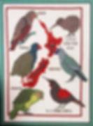 E Birds pic_edited_edited.jpg