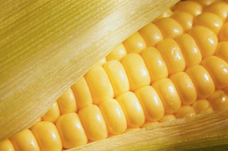 How to cook corn on the cob.