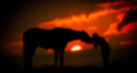 Girl kissing horse sunset.png