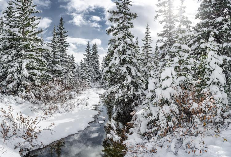 winter-stream-trees-bow-lake-photo-etzel