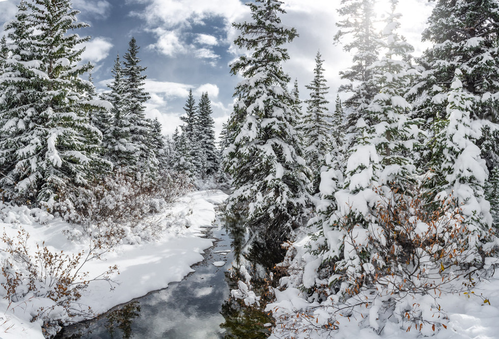 Winter stream through the Trees, Bow Lake in Banff Canada
