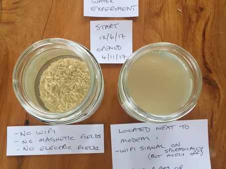 EMF experiment with rice and water