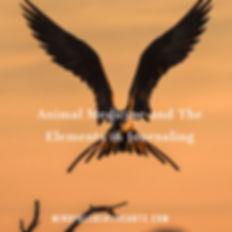 Animal Medicine Journey.jpg