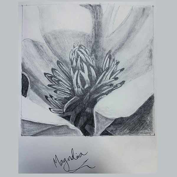 Magnolia 3_sm.jpg