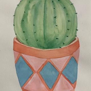 cactus Abi.JPG