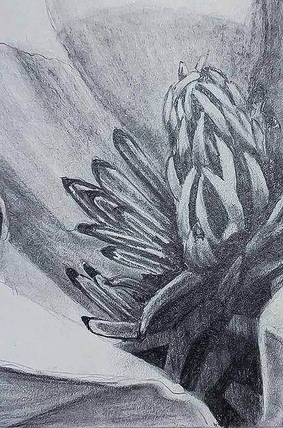 Magnolia 3c.jpg