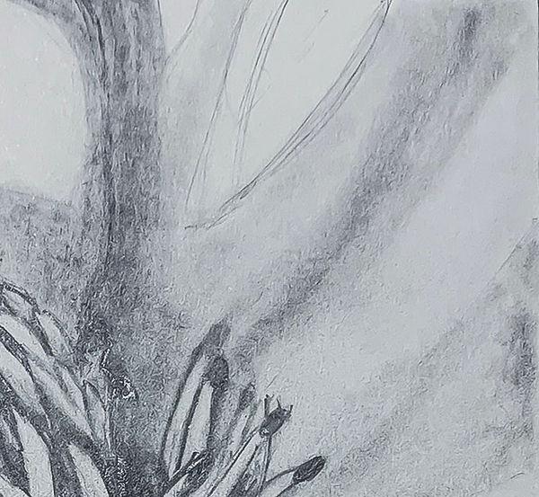 Magnolia 3a.jpg