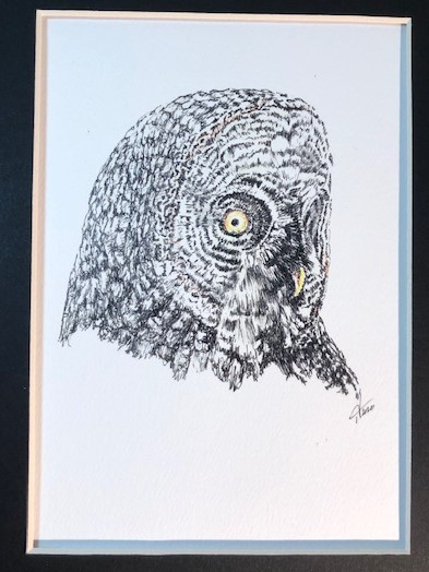 Owl Matted Print $75