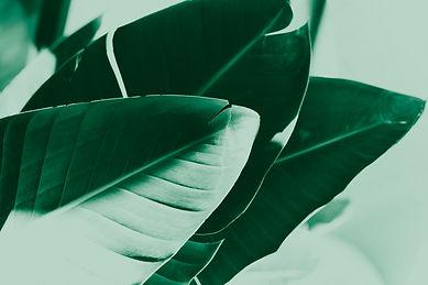Blad_groen.jpg
