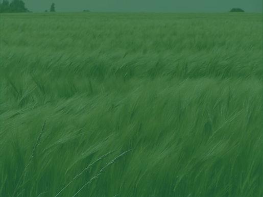 Grass_edited_edited.jpg
