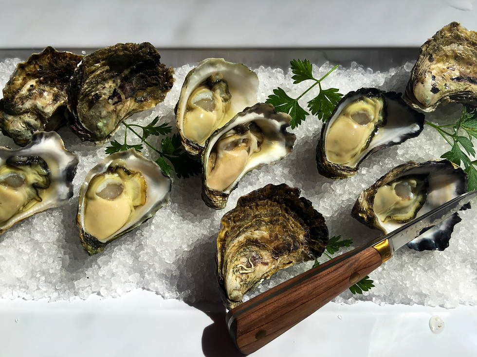 Oyster....png