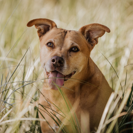 Madi - Dog Photography Session, Stanmore Bay, Auckland