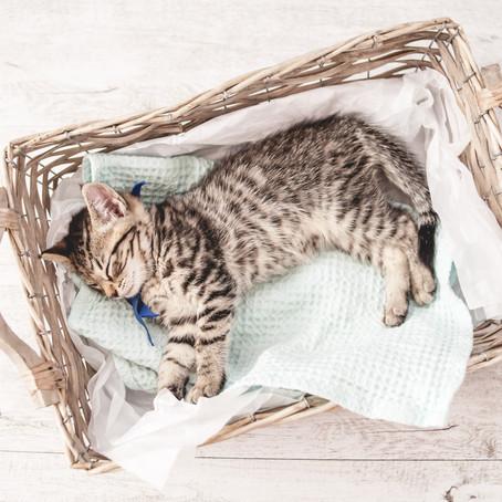 We got a Kitten! Newborn Kitten Photoshoot, Auckland, NZ