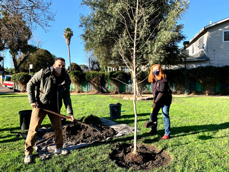 Planting Trees & Peace Across the World