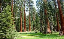redwoodsSmaller.jpg