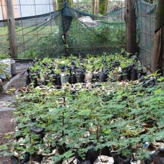 New tree nursery